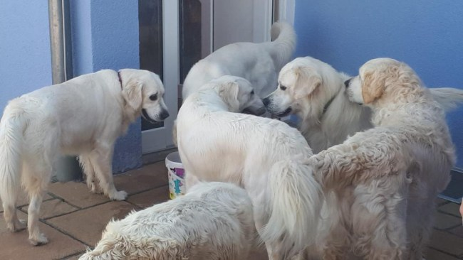 hund absamen