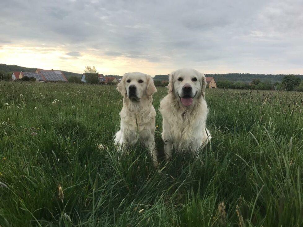 Mali & Lizzy